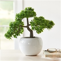Bonsai in Ceramic Pot