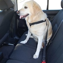 Dog Car Harness